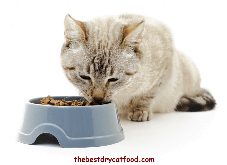 best dry cat food reviews, healthiest dry cat food