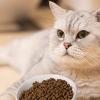 best grain-free dry cat food
