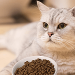 Best Grain Free Dry Cat Food 2020 | Latest Reviews Never Seen Before