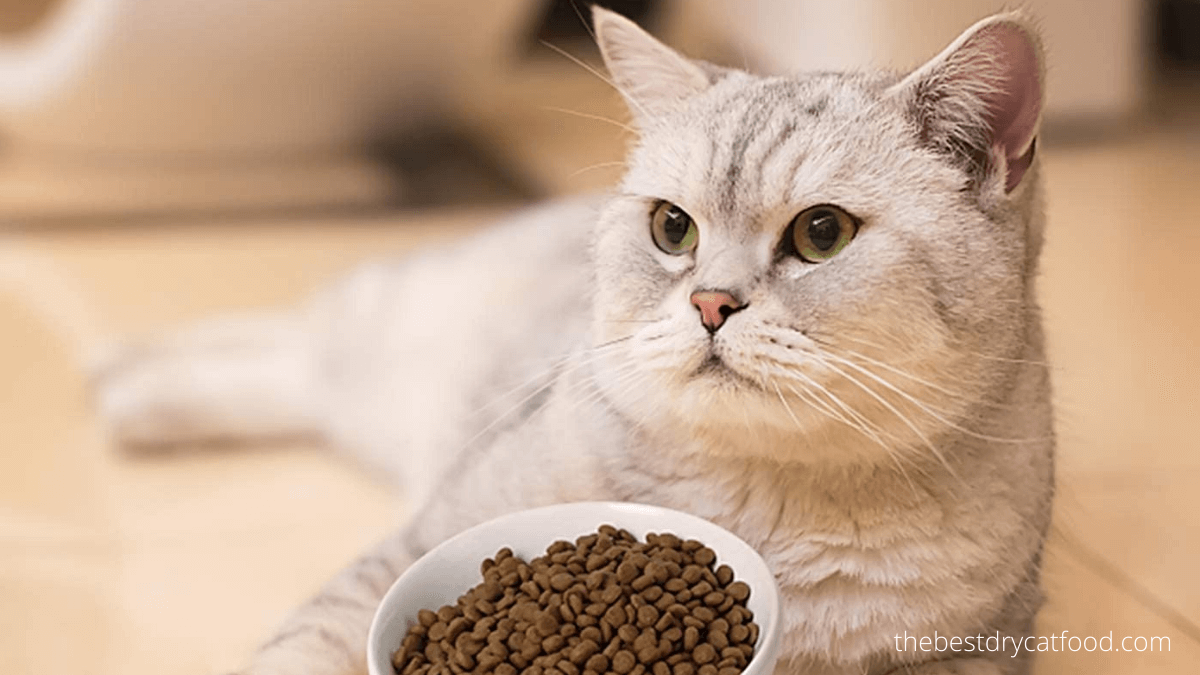 best grain-free dry cat food