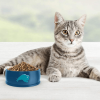best indoor dry cat food