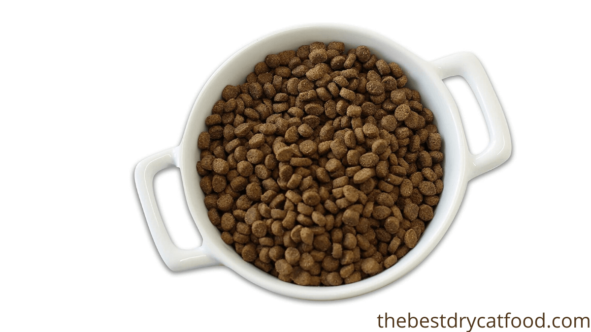 best dry cat food for upset stomach buying guide