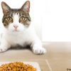 best dry cat food for sensitive stomachs