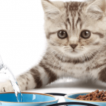 Best High Protein Dry Cat Food 2021 Reviews & Buyer Guide