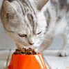 Best Dry Cat Food For Urinary Tract Health