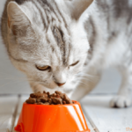 Best Dry Cat Food For Urinary Tract Health Reviews & Buyer Guide