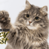 Purina Fancy Feast Dry Cat Food Reviews