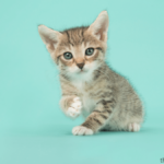When to Switch From Kitten to Cat Food | All You Need To Know