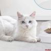 15 best dry cat food brands