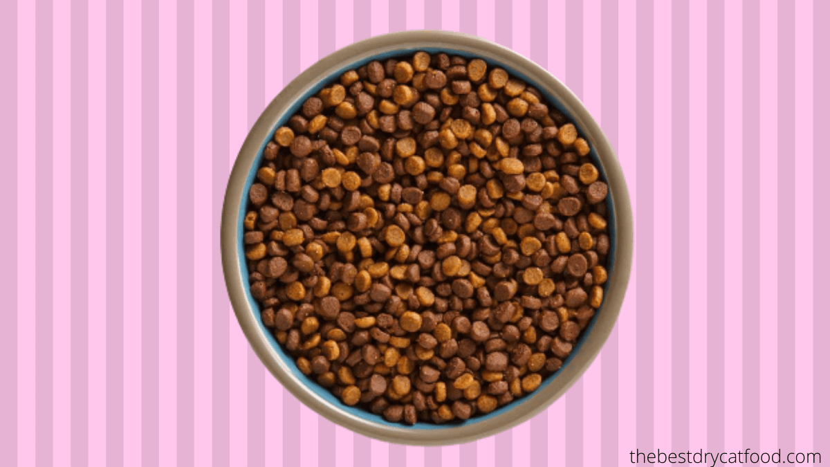 best dry kitten food buying guide