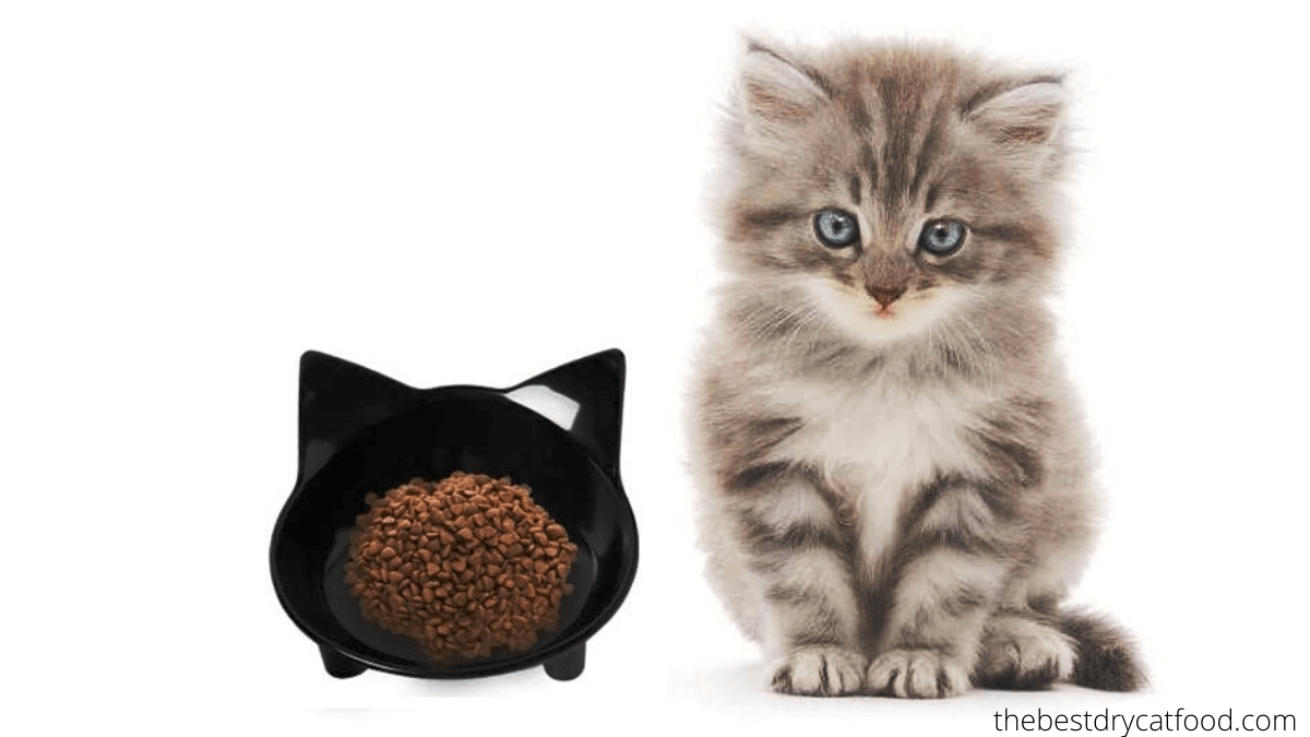 best dry kitten food reviews