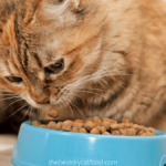 how to make dry cat food