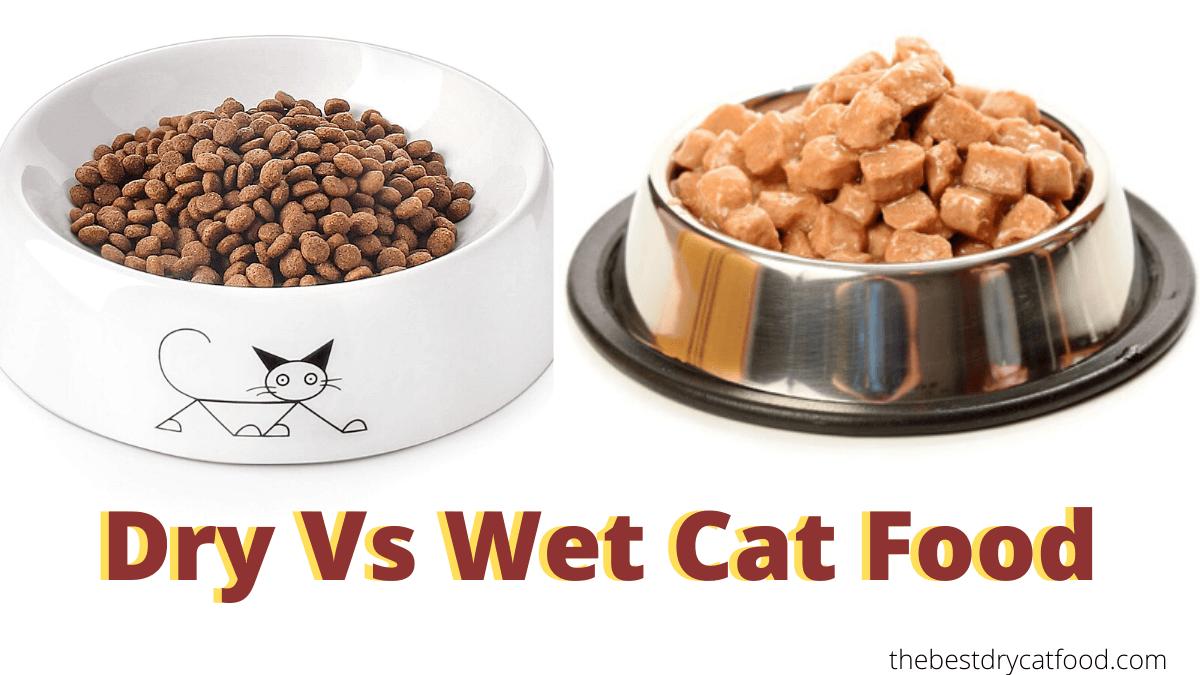 wet versus dry cat food, wet or dry cat food