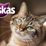 Whiskas Dry Cat Food Reviews | Exclusive Analysis & Full Buying Guide
