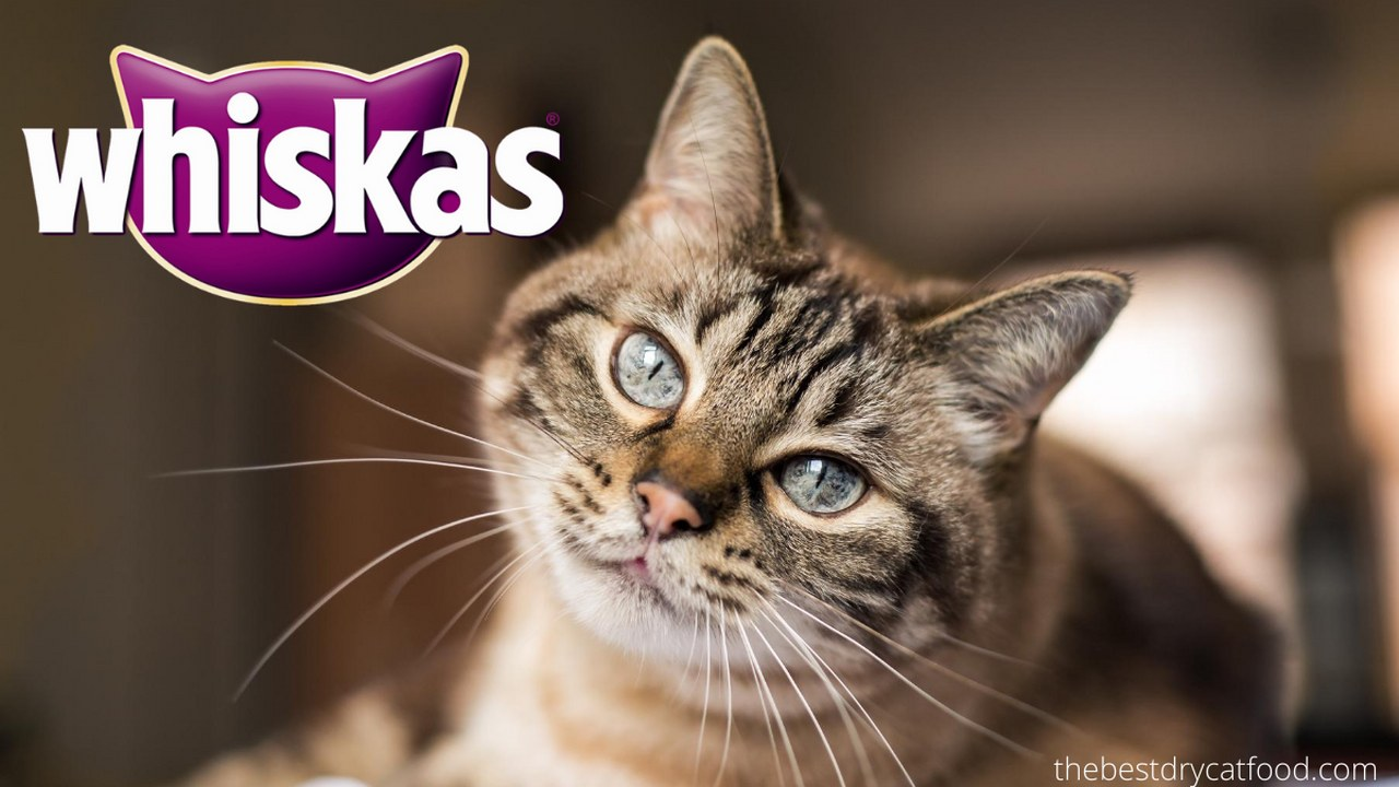 Dry Cat Food Whiskas Brand