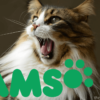 iams dry cat food reviews