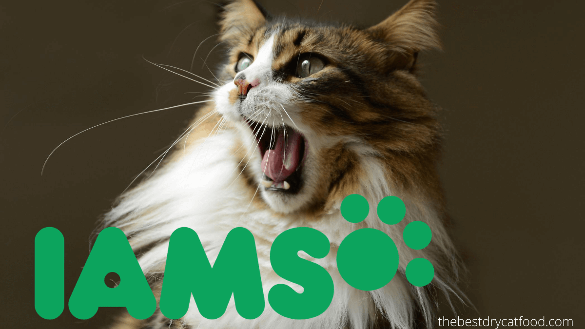 iams dry cat food reviews